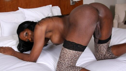 Blacktgirls.com – Hung Black Starlet India Strokes! India 2009 Transsexual