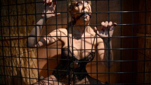 Spizoo - Cherie Deville - Captivity Pet